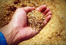 produksi padi dan jagung