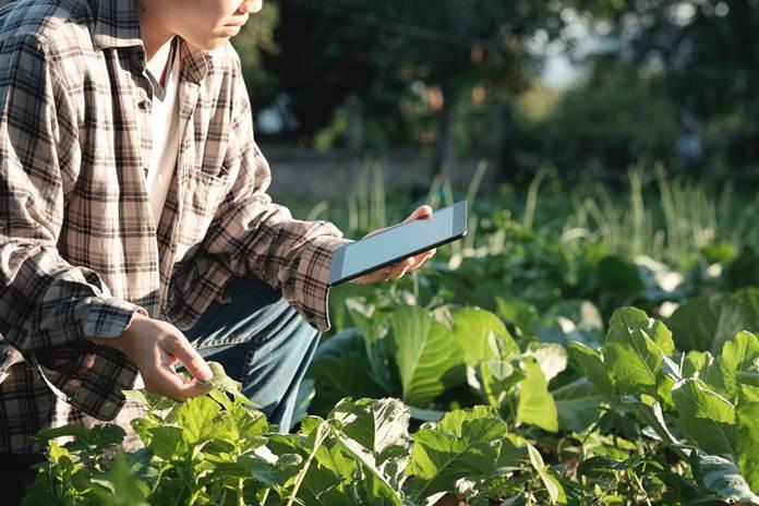 bidang pertanian