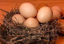 telur ayam