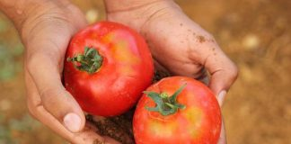 Gerakan Gemar Tanam dan Konsumsi Buah-buahan dan Sayuran