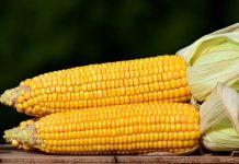 pasar utama jagung manis
