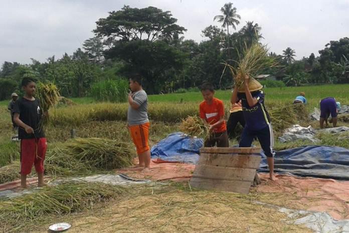 petani dan santri milenial