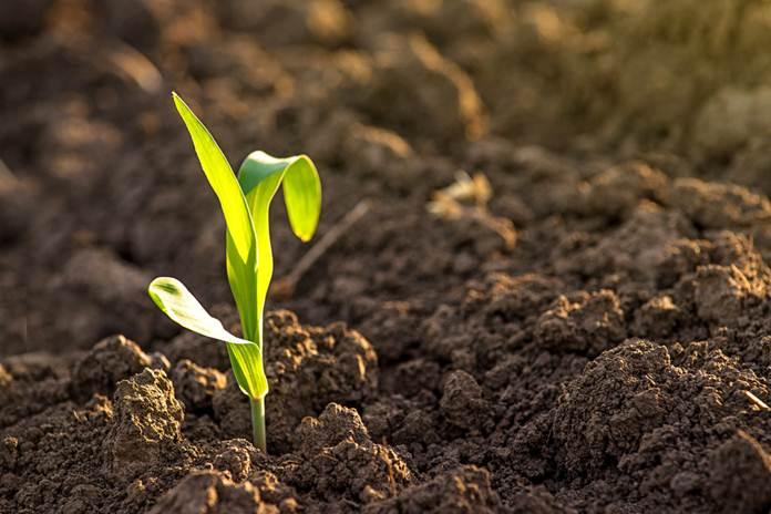 sektor pertanian