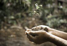 pembenah tanah organik cair