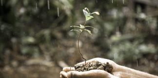 kemasaman tanah