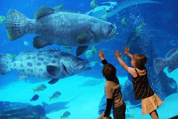 akuarium terindah di dunia