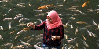 kolam ikan cantik di Salatiga