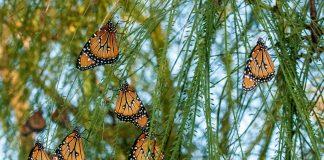 Habitat kupu-kupu langka