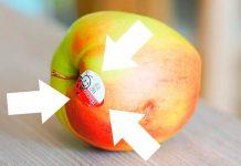 kebusukan buah