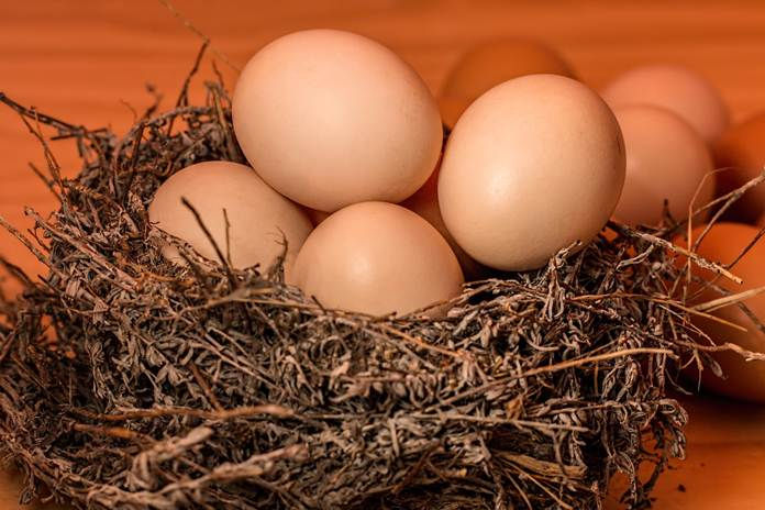 Jenis Pakan Pengaruhi Warna Daging dan Telur Ayam
