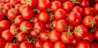 jenis tomat