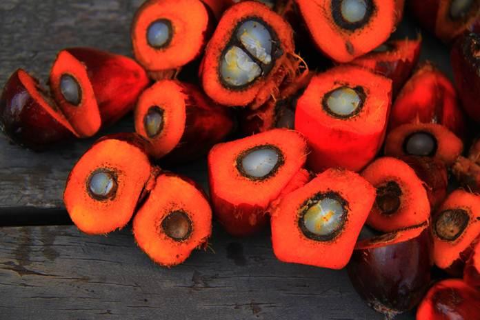 Harga kelapa sawit di Pesisir Selatan
