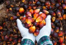 harga kelapa sawit