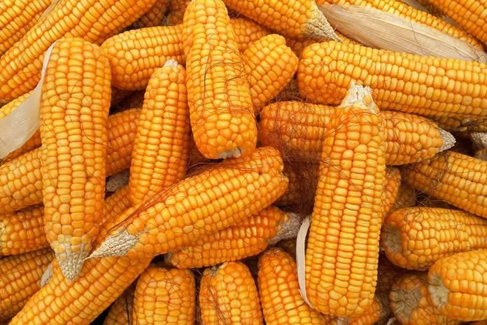 Stabilitas harga jagung