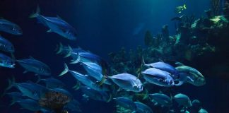 stok ikan dunia semakin menipis
