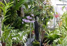 Bertanam bunga anggrek di greenhouse