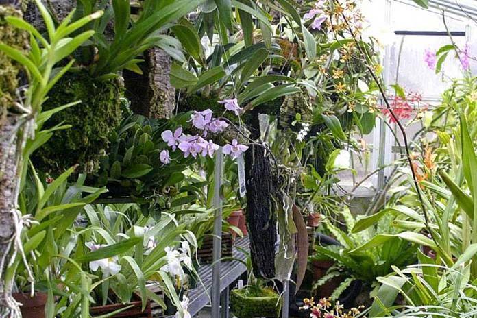 Teknik Bertanam Bunga Anggrek Di Greenhouse Pertanianku