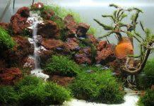 cara membuat air terjun cantik untuk aquascape
