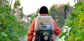 dampak merugikan penggunaan pestisida kimia