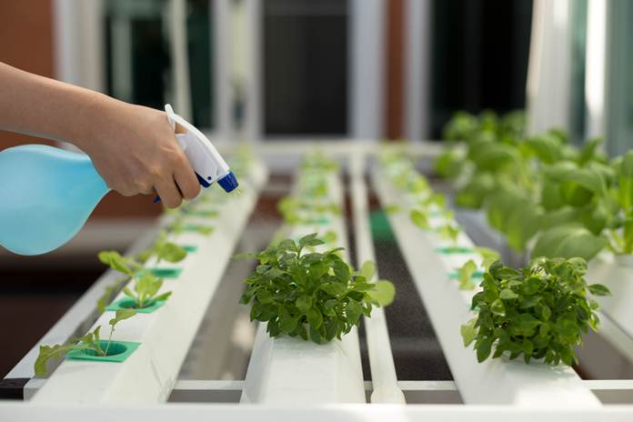 hidroponik sayuran sederhana