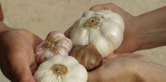 produksi bawang putih