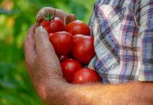 ketahanan pangan dunia