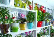 Indonesia jadi kiblat tanaman hias dunia