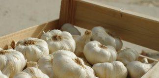 surat persetujuan impor bawang putih