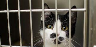 penyakit menyerang kucing