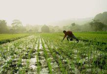 pertanian daerah