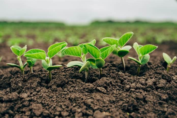 teknik pengelolaan tanaman kedelai
