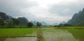 pengelolaan air untuk tanaman padi