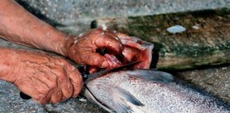 cara cepat bersihkan sisik ikan
