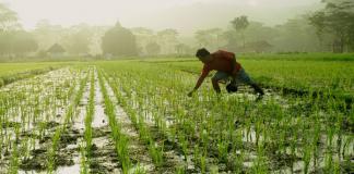 cara memilih tanaman untuk sistem polikultur