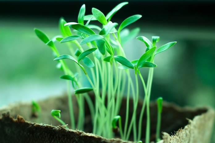Teknologi pertanian terbaru di Indonesia