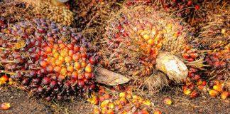 Ekspor sawit Indonesia