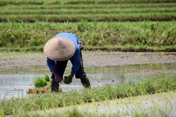 Jenis pertanian Indonesia
