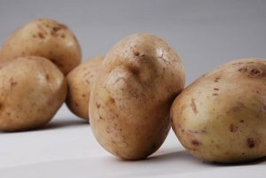 kultivar kentang