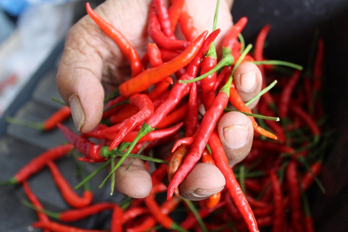 sentra produksi cabai dan bawang merah