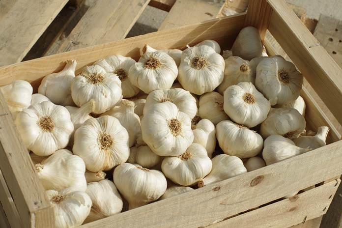 harga bawang putih