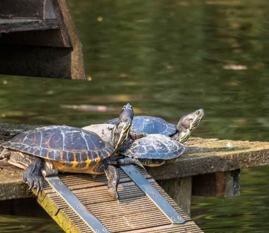 Tempurung kura-kura