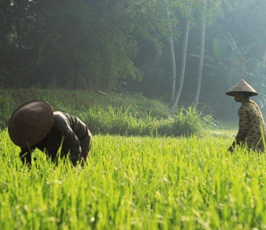 mempertahankan lahan pertanian