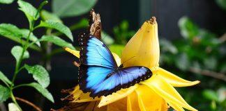 spesies hewan dan tumbuhan terancam punah