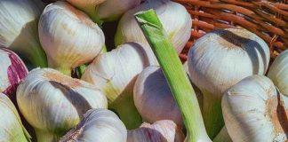Pemeliharaan bawang putih