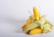 Penanganan pascapanen jagung manis
