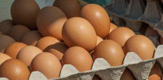 harga telur dan ayam potong