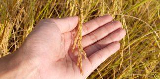 Sifat hasil pertanian