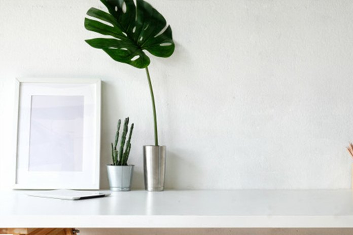 tanaman hias untuk interior rumah