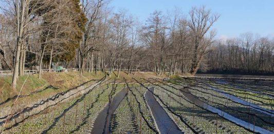 pertanian Jepang
