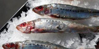 manfaat konsumsi ikan sarden